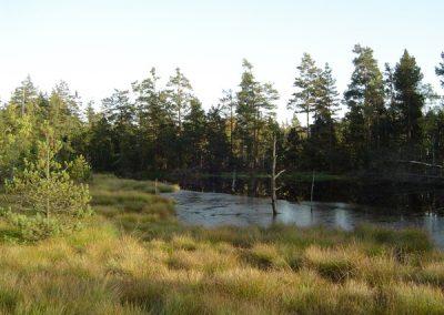 Chráněná národní přírodní rezervace Červené blato